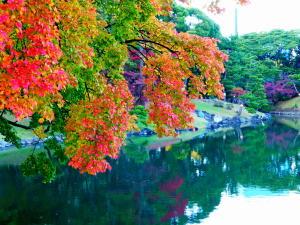 浜離宮恩賜庭園の紅葉