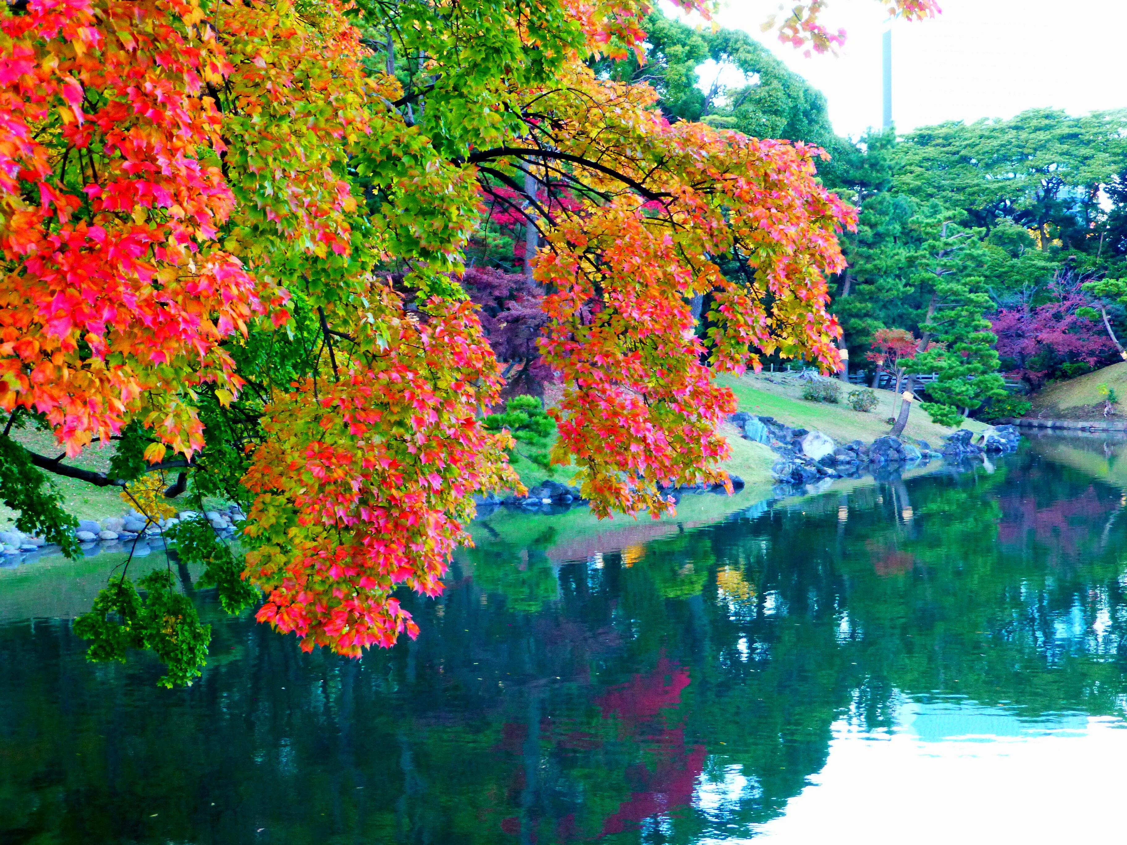 紅葉の浜離宮恩賜庭園